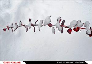 برف پاییزی در مشهد