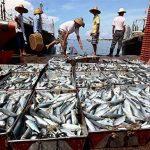 چین بازار ماهی ایران را خراب کرده است