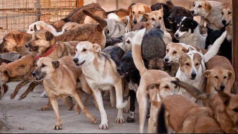 کشتن ۳۷ قلاده سگ با مجوز قانونی!