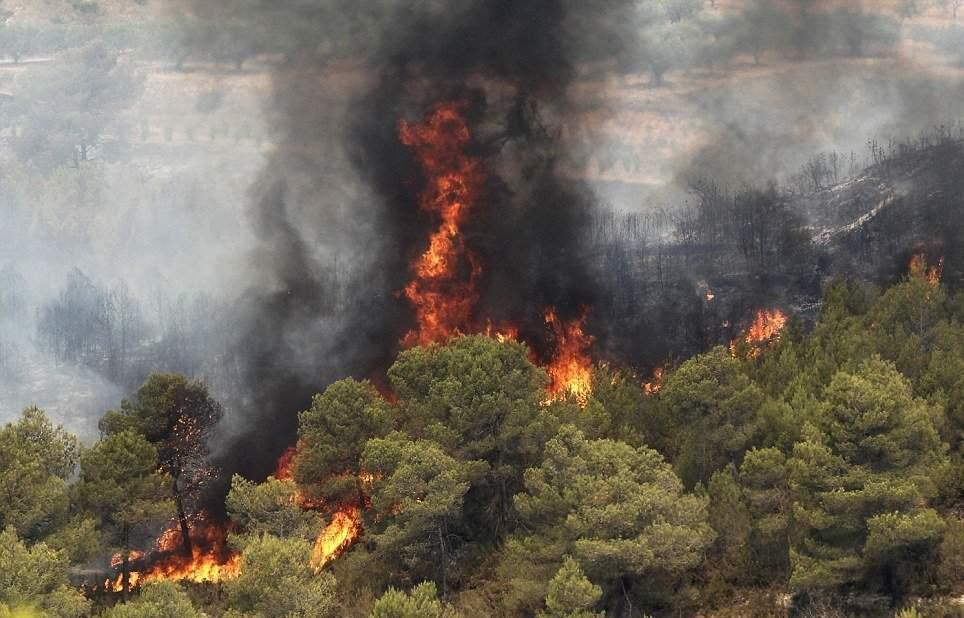 زندان در انتطار عاملان آتشسوزی در جنگلها