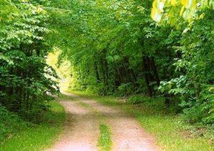 طبیعت سبز قم پس از ۱۰ سال