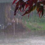 تهران تا پایان هفته باران نمیبارد / سامانه بارشی وارد غرب کشور میشود