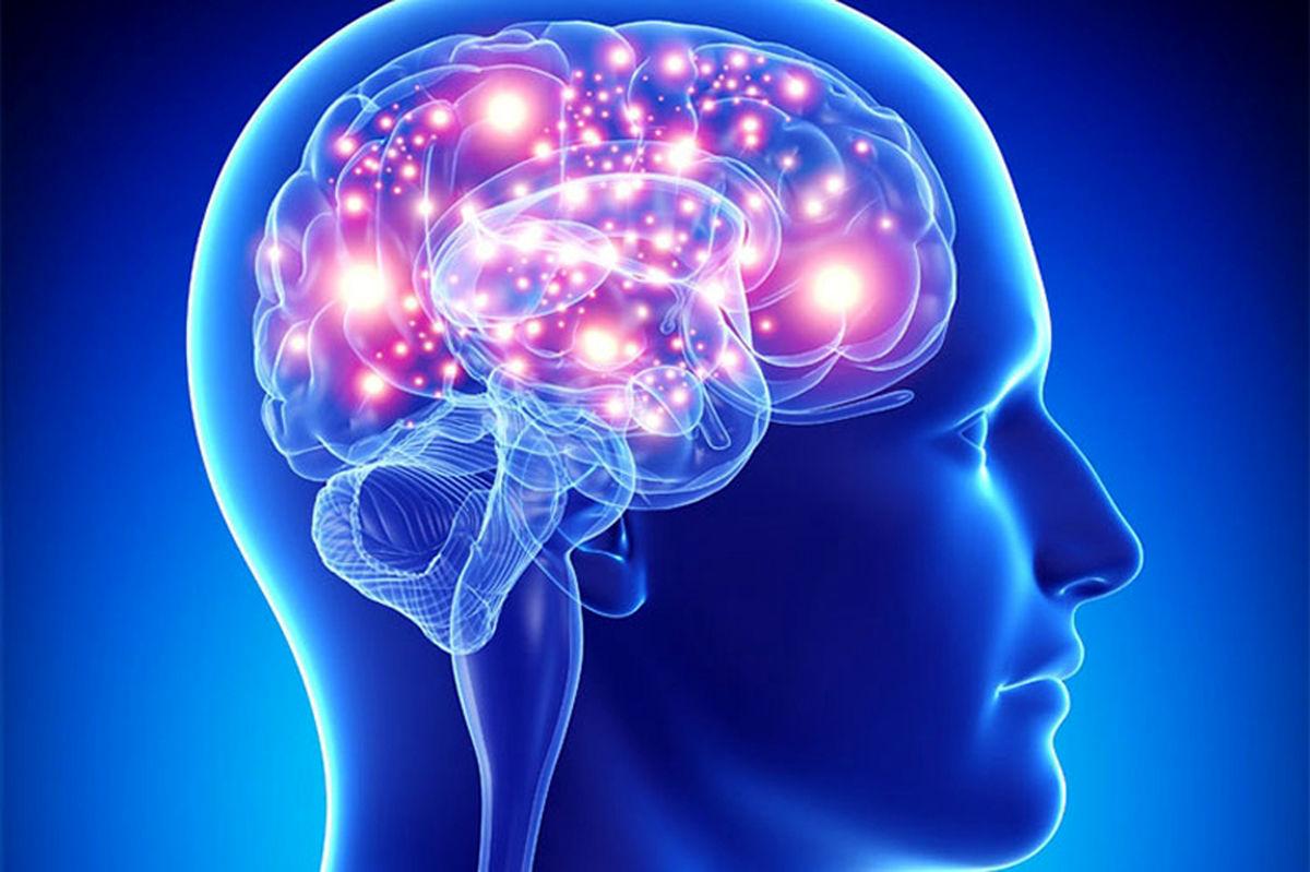 چند ماده غذایی که مغز را جوان نگه میدارند