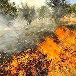 در کهگیلویه و بویراحمد؛ آتش همچنان بر خامی می تازد/تلاش امدادگران در دمای ۵۰ درجه