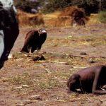 عکسی که عکاس را به خودکشی کشاند