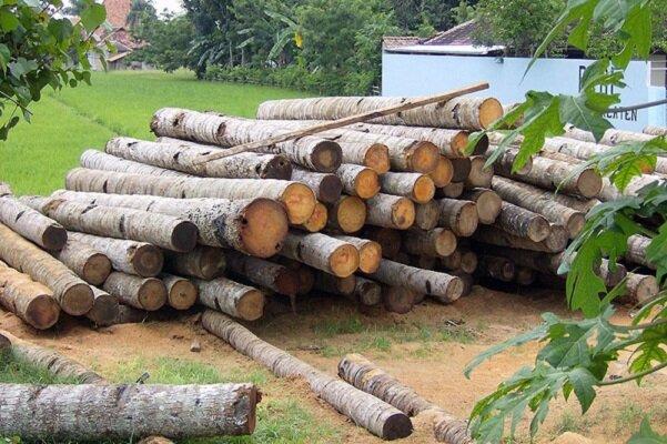 صدای ورشکستگی صنایع چوب و کاغذ به آسمان رسید/ قاچاقچیانِ چوب کارگران را به روز سیاه نشاندند