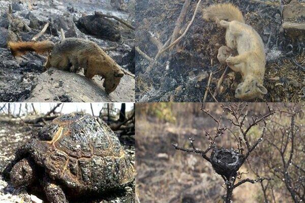 آتشسوزی جنگلهای زاگرس بحران ملی/ متهم ردیف اول چه کسی است؟