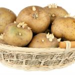 سیب زمینی جوانهزده قابل مصرف نیست