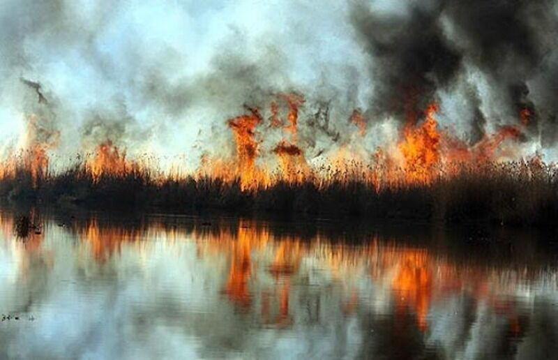 آتش سودجویان به جان تالاب انزلی